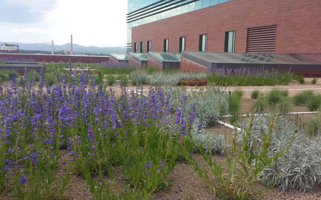 Denver Greens endorse Green Roof initiative I-300